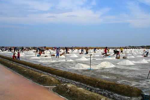 pak-thale-thailand-rice-paddies