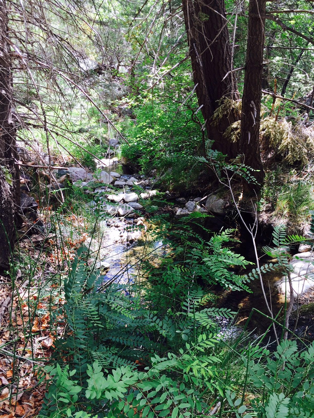 Ramsey Canyon