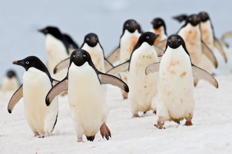 penguin 7C2V1361 picture