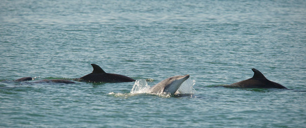 Bottlenose Dolphin Picture @ Kiwifoto.com