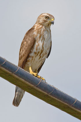 Texas Pictures and Photos - Photography - Bird | Wildlife ...