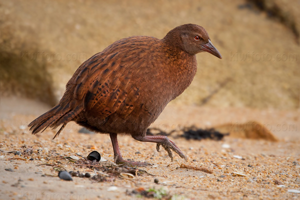 Weka Photo @ Kiwifoto.com
