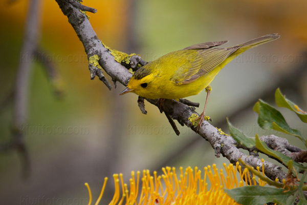 Photography - Bird | Wildlife | Nature - Christopher Taylor